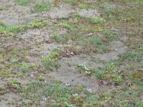 Bare Spots In A Lawn Grass Seed Seed Germination Different Types Of Grass
