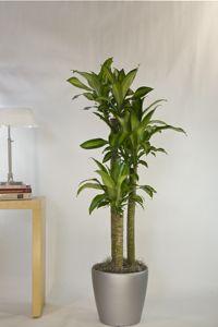 Houston\'s online indoor plant & pot store - Interior plant nursery ...