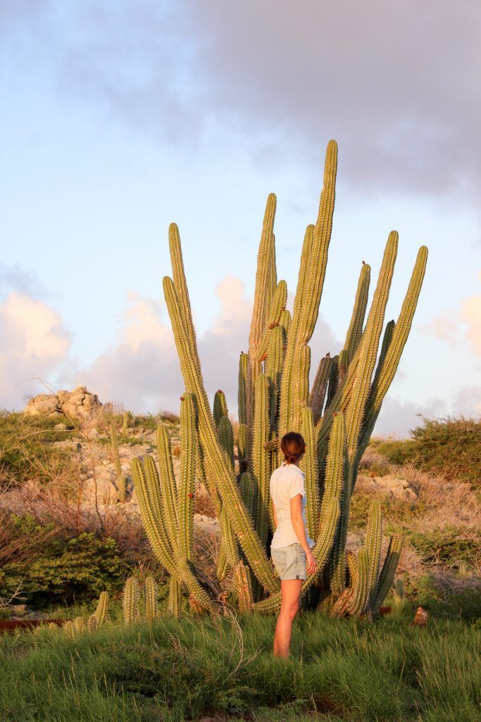 three days in aruba adventure beyond the all inclusive travel inspiration no man before
