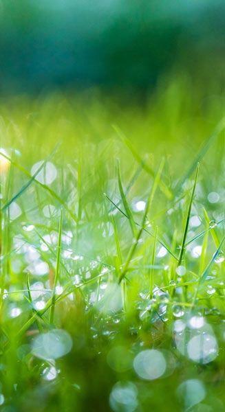 Nature Wallpapers Green Morning Grass Desktop Hd Wallpaper Download In High Resolution At