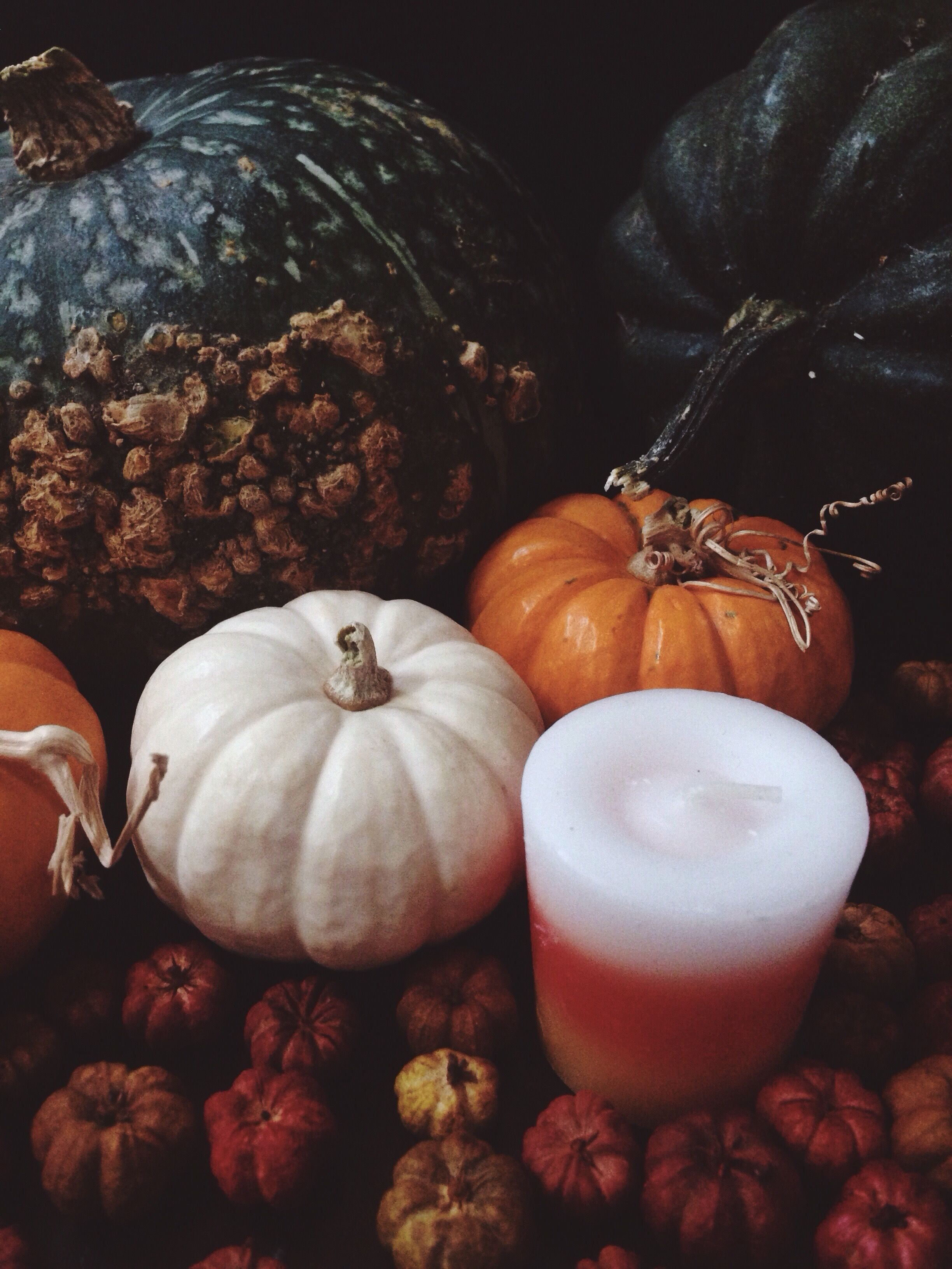 Autumn fall studio vignette. Pumpkins, kabocha squash and Candy Corn - Wildthorne Instagram