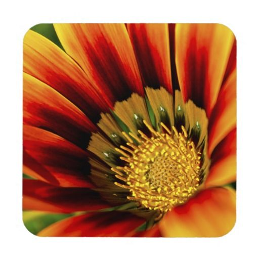 Hope Hard Plastic Coasters with cork back. #coasters #flowers #photography