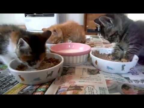 Kitten Falls Asleep While Eating Animals Pets Cats Kittens Love Care Videos Kittens Super Cute Animals Cats And Kittens