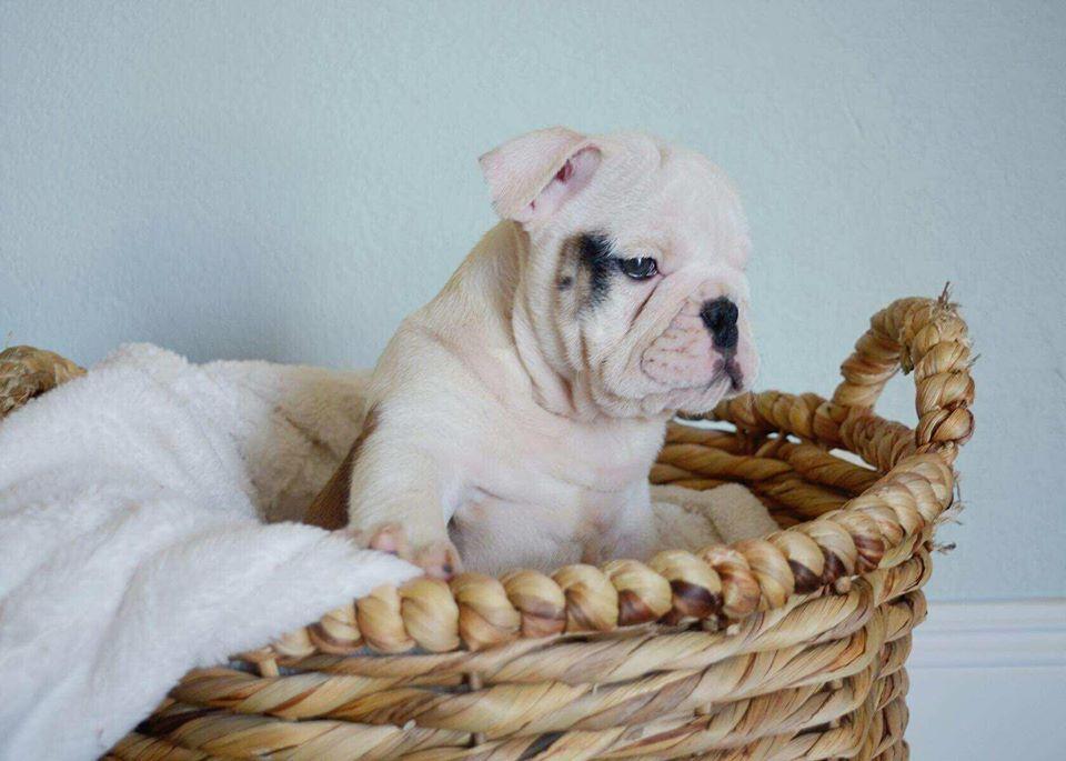 Dog training in henderson nevada usa provide best dog
