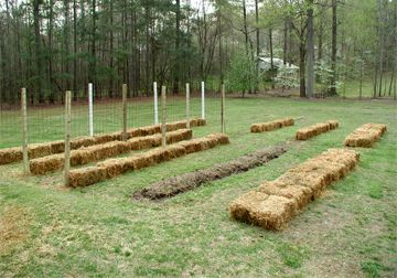Haybale gardening