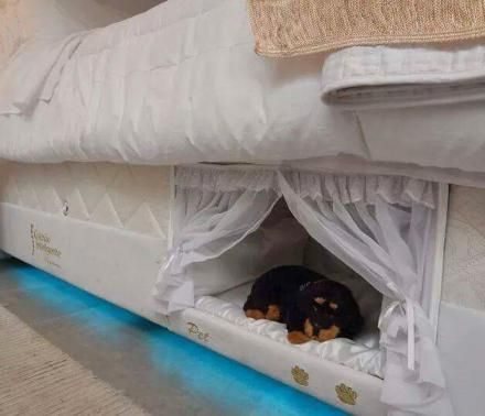 This Mattress Has A Dog Bed Built Into The Side Of It Built In Dog Bed Pet Bunk Bed Mattress Companies