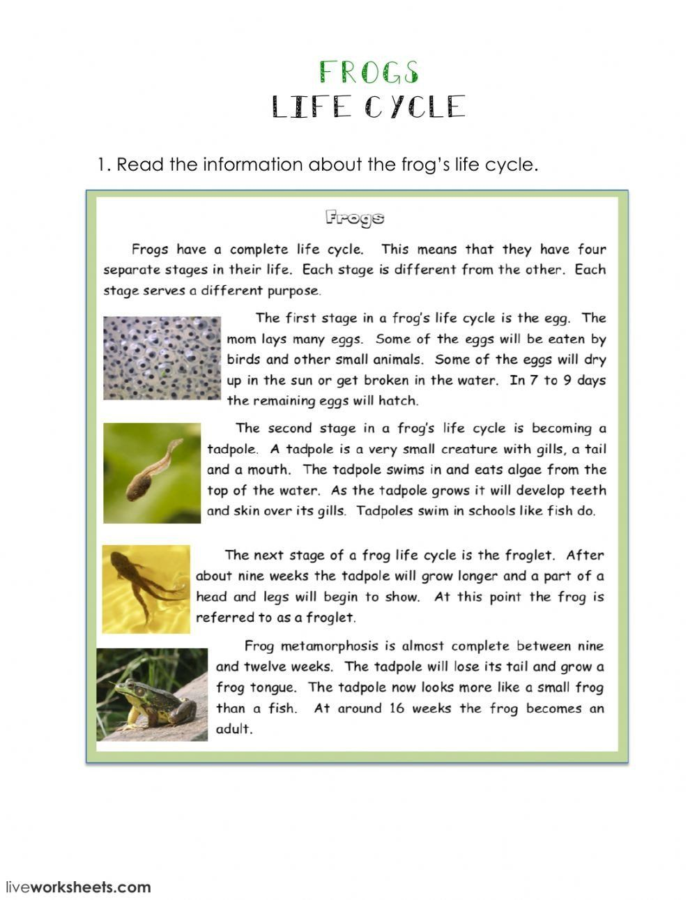 Tadpole Life Cycle Worksheet Life Cycle Of A Frog Interactive Worksheet Tadpole Life Cycle Life Cycles Worksheets