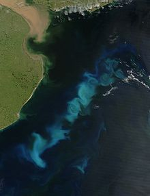 An oceanic phytoplankton bloom in the South Atlantic Ocean