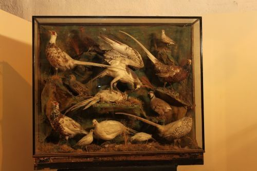 Victorian Case Of Taxidermy Birds Taxidermy Painting Victorian