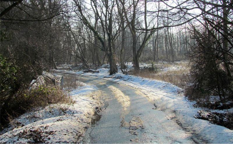 Wild Hill - February 2012