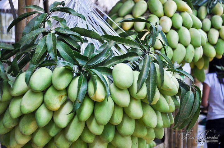 mangoes from phillipines