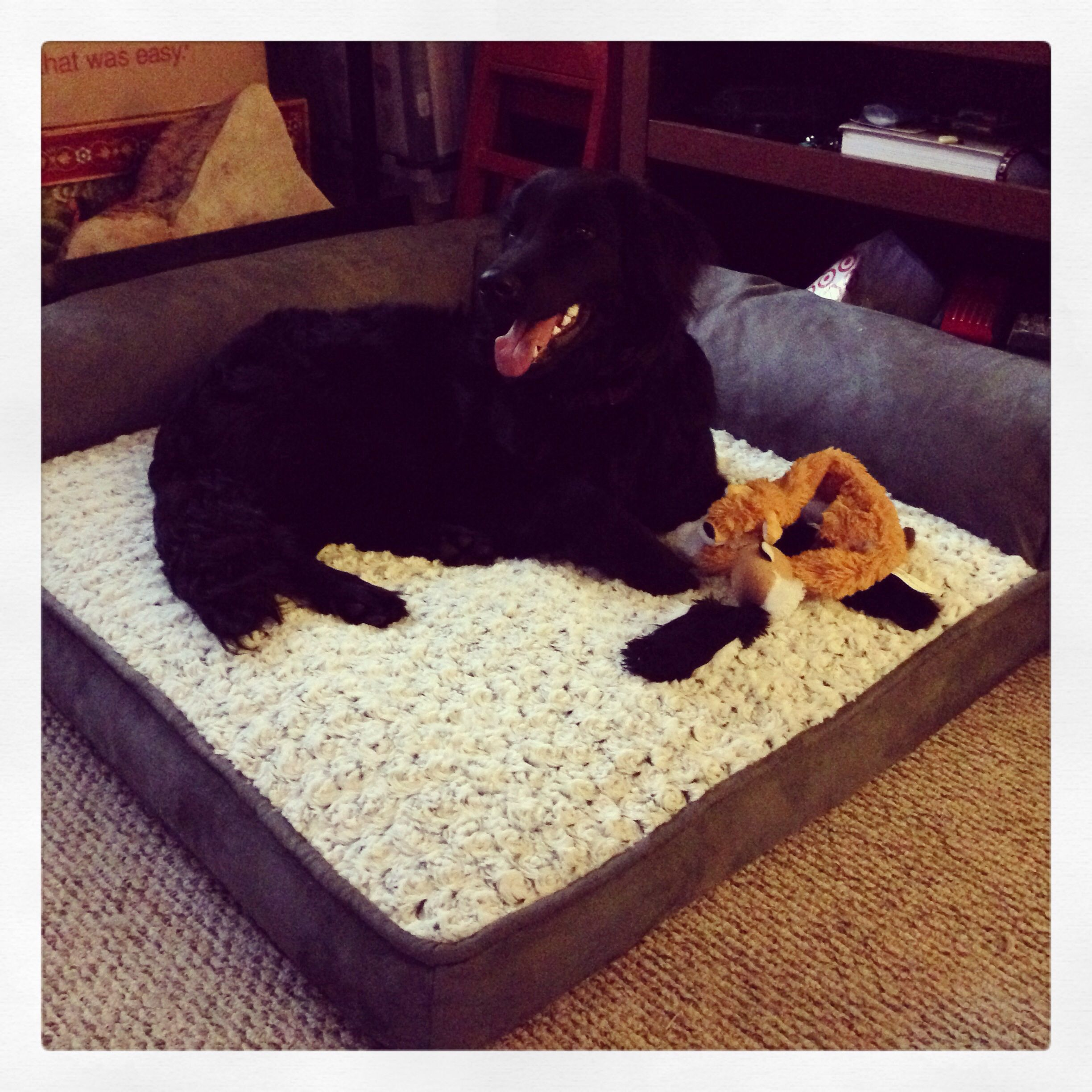 costco dog bed | home | pinterest | costco, dog beds and doggies