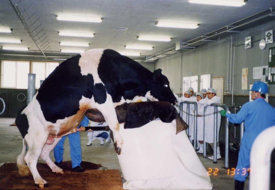 Does Eating Meat Support Bestiality  Vegan Stuff  Vegan -2920
