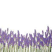 Lavender Flower Clip Art