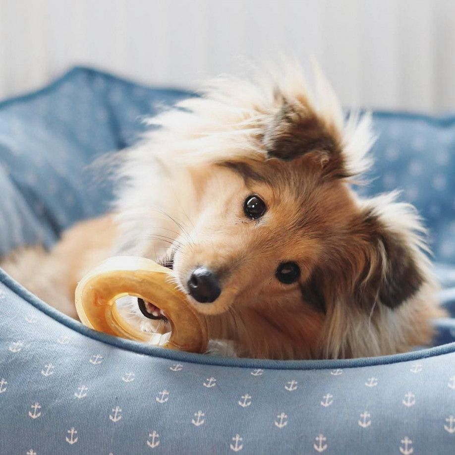 Kostenlos Bilder Ausdrucken In 2020 Haushund Kostenlose Bilder Bilder Zum Ausdrucken