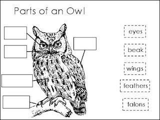 Parts Of An Owl Owls Kindergarten Owl Preschool Owl Activities
