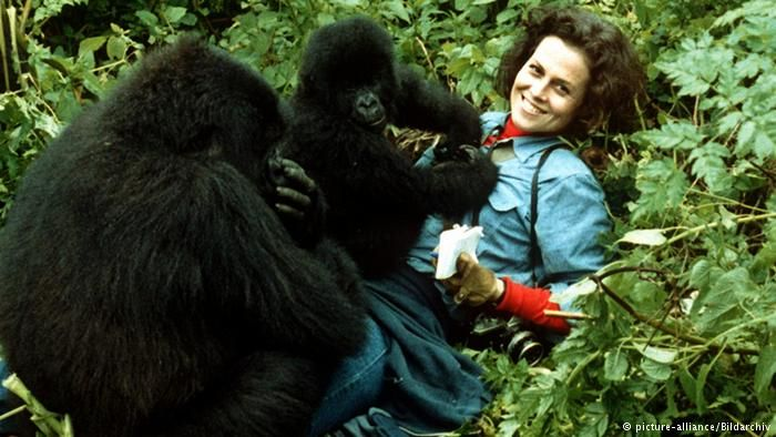 an analysis of the gorillas in the mist by dian fossey Biology term papers (paper 17855) on gorillas in the mist : gorillas in the mist gorillas in the mist by dian fossey is an excellent account of her.