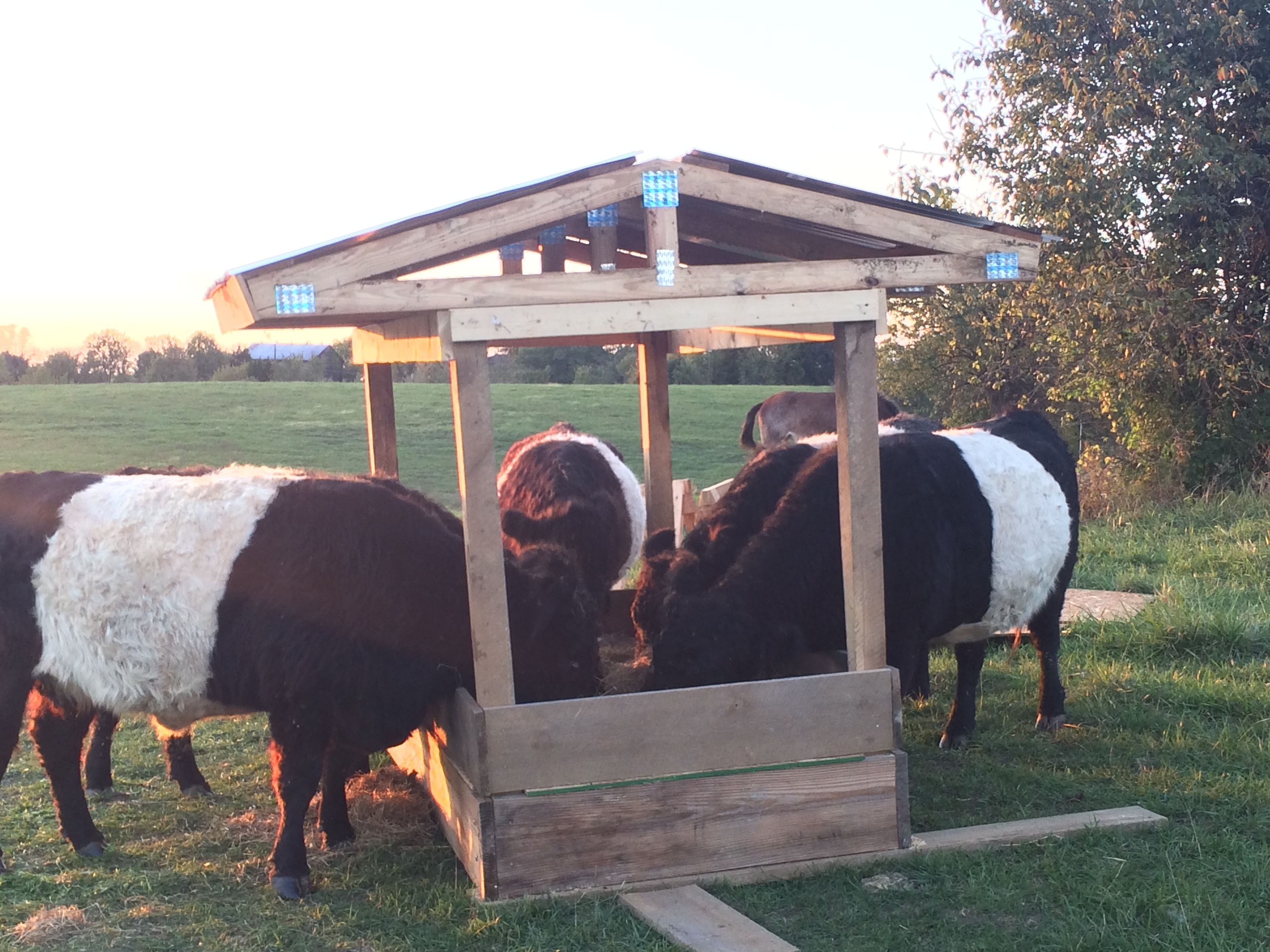 equipment for bale product cattle square cows industries adult paton livestock hay feeder