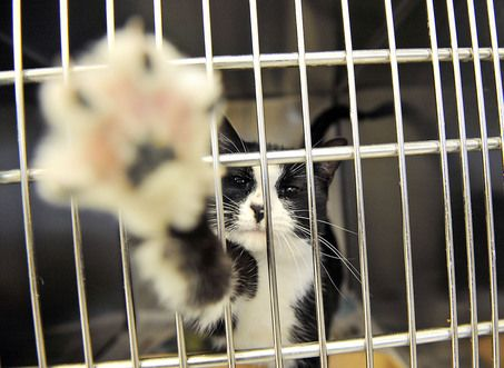 Liberty Humane Society S Contract With Jersey City Nearly Doubled