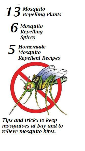 How to get rid of Mosquitoes: TIPS AND TRICKS TO KEEP ...