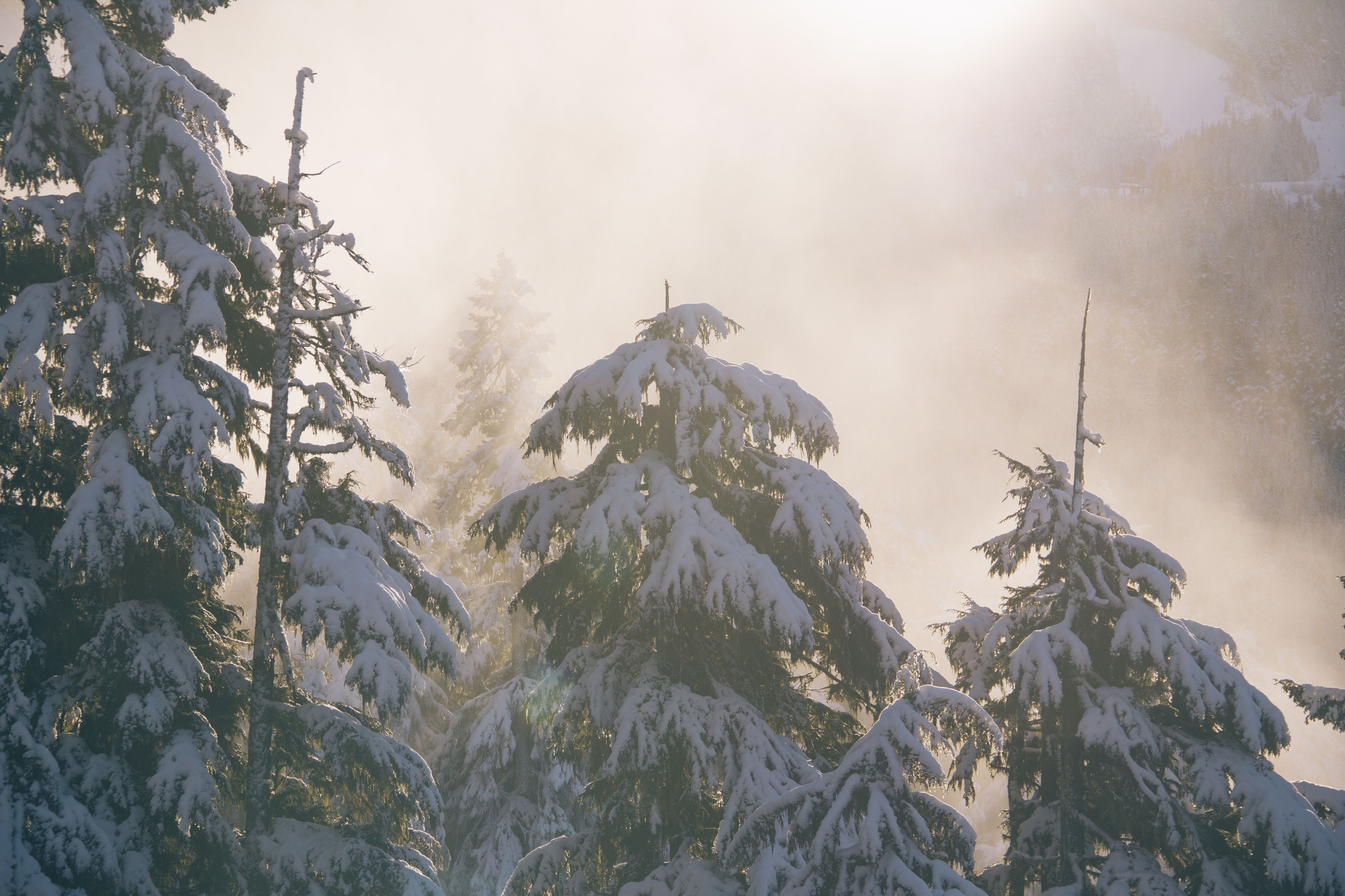 Snow. Winter. Trees. Mountains. Mist. Sunlight.  No Credit Needed. UnSplash - All photos published on Unsplash are licensed under Creative Commons Zero which means you can can copy, modify, distribute and use the photos, even for commercial purposes, all without asking permission.  The presentation and collection of these images is copyrighted by Crew Labs Inc. (2014).