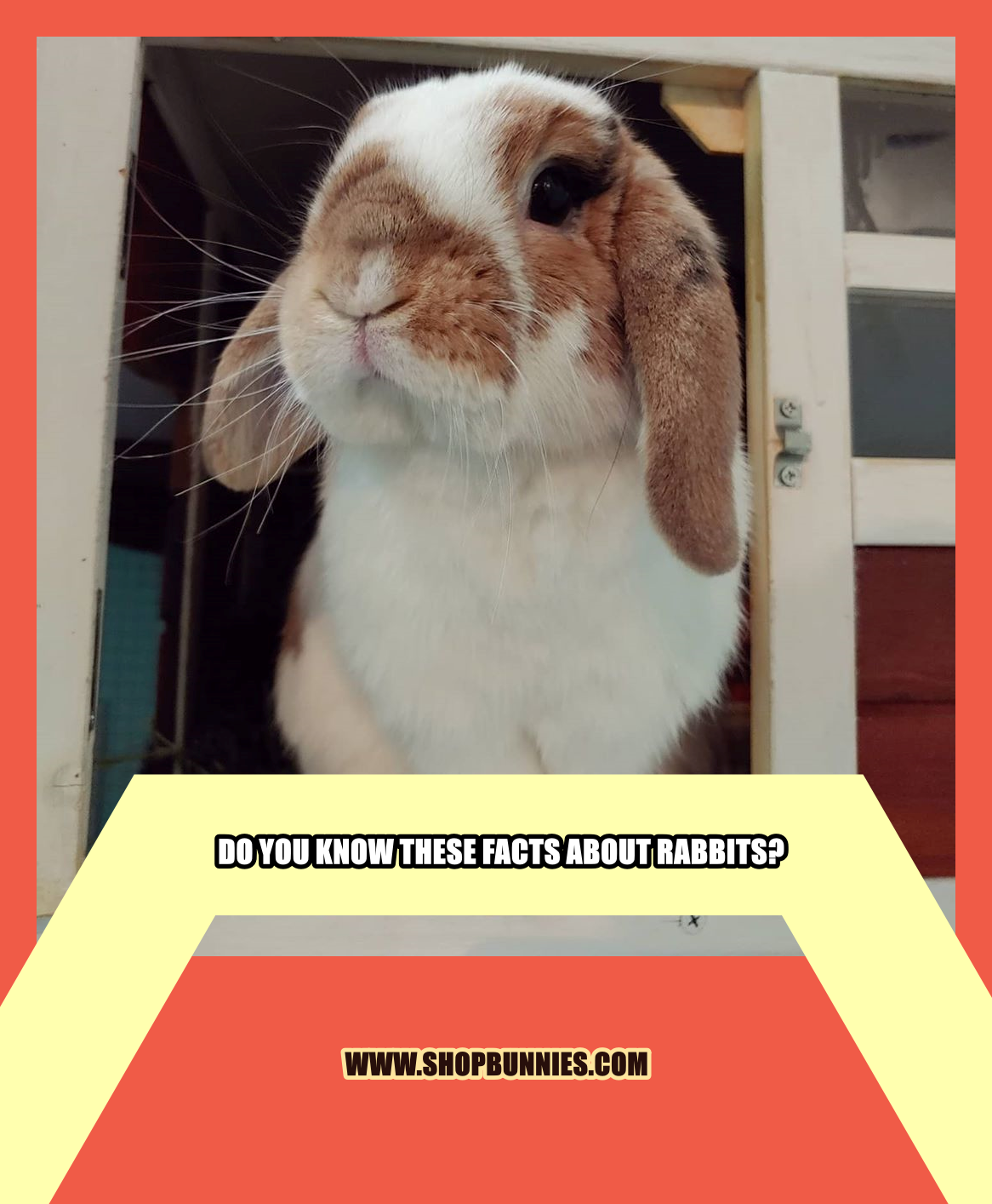 Do You Know These Facts About Rabbits In 2020 Pet Bunny Rabbit