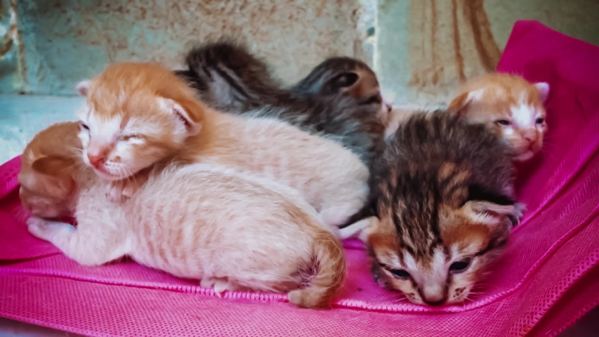 Kitten Newborn Baby Cats Open Stock Footage Video 100 Royalty Free 1034331113 Shutterstock Baby Cats Baby Kittens Kitten