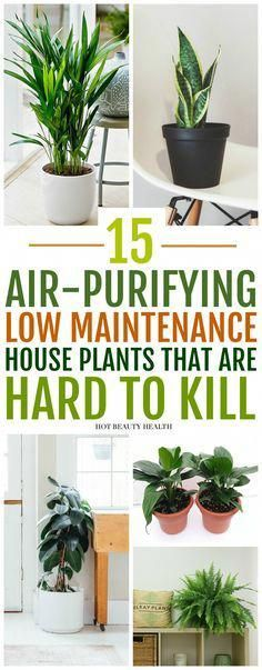 The best air purifying plants that are super low maintenance and hard to kill. According to NASA, these types of houseplants ( ex: gerbera daises, snake plants, peace lily, boston ferns, and more) are great for indoors to clean the air. Place anywhere inside your home as decor like bedrooms, bathroom and kitchen or at the office. Many need only low light and are also pet safe. Hot Beauty Health