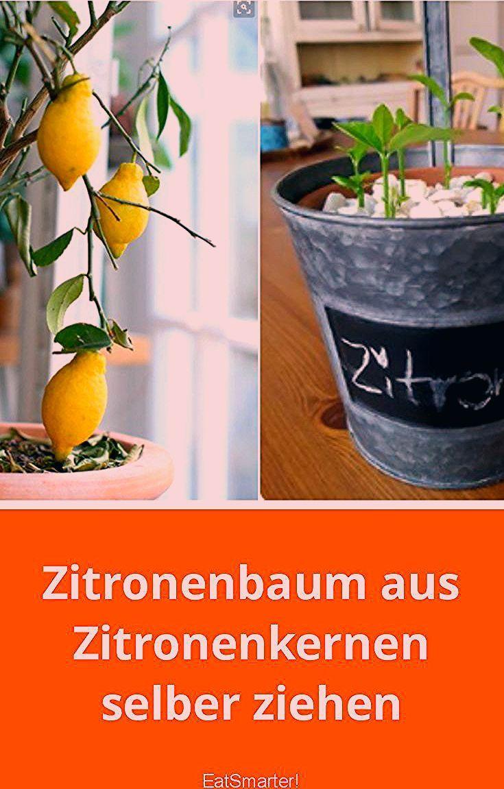 Photo of Zitronenbaum aus Zitronenkernen selber ziehen