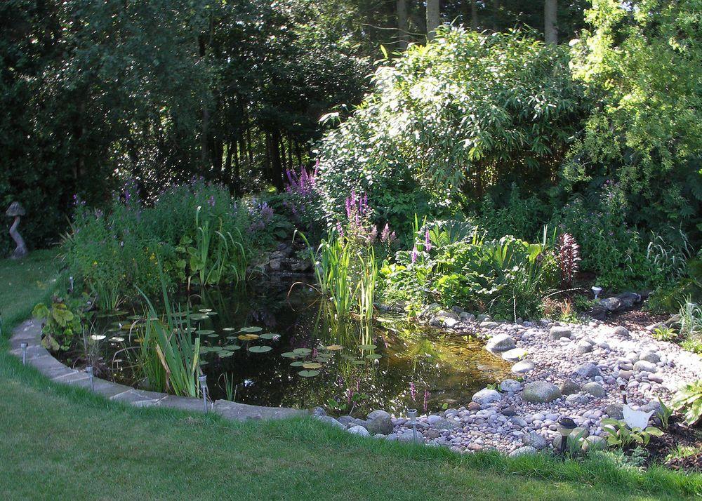 Image Result For Garden Pond Design Uk Garden Pond Design Naturalistic Garden Ponds For Small Gardens