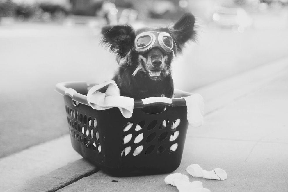 39 fotos de cachorros que vão deixar seu coração quentinho