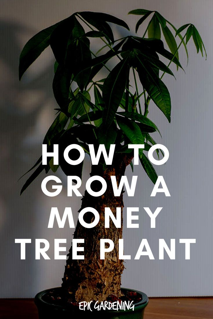 How to plant a money tree