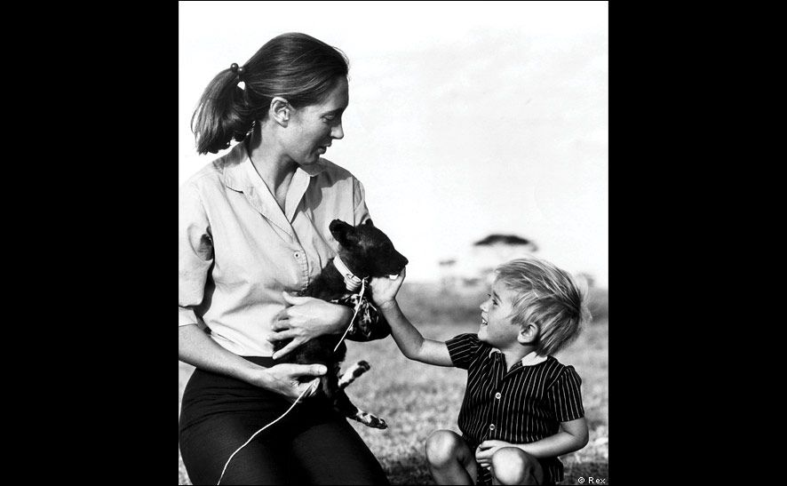 Jane Goodall's Son Grub Today - Bing Images