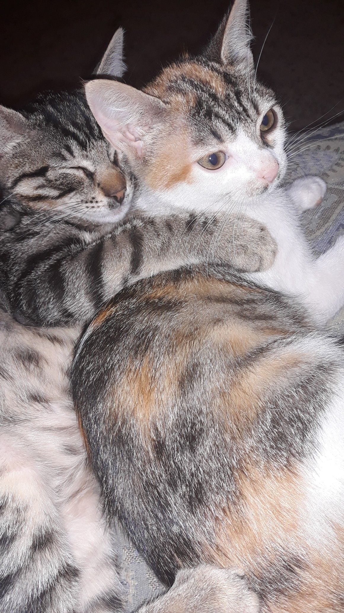 Chat & chatte