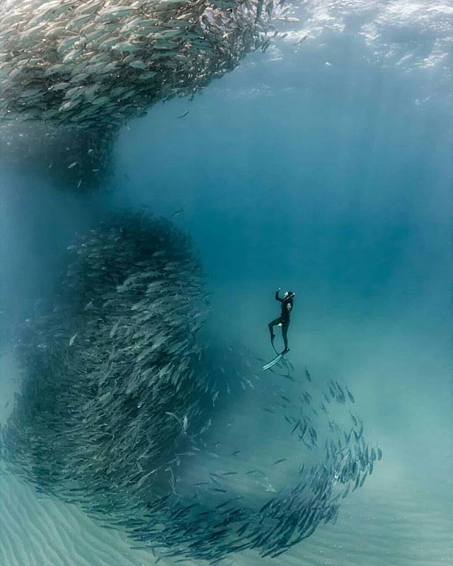 Free Diving In Cabo, Pulmo - Mexico