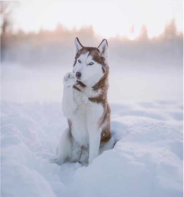 Pin de Alicia Auténtico en animalitos | Pinterest | Lobos, Perro ...
