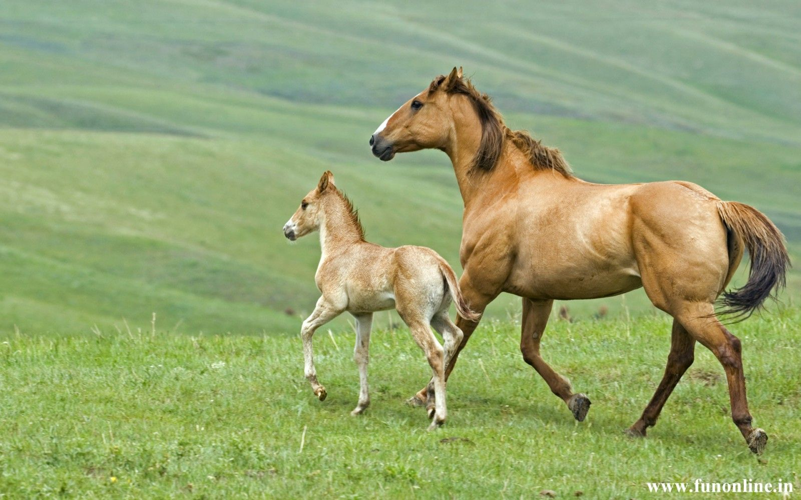 Wallpapers Kids Sad Horses X Funny Animal Picture Beautiful Animals