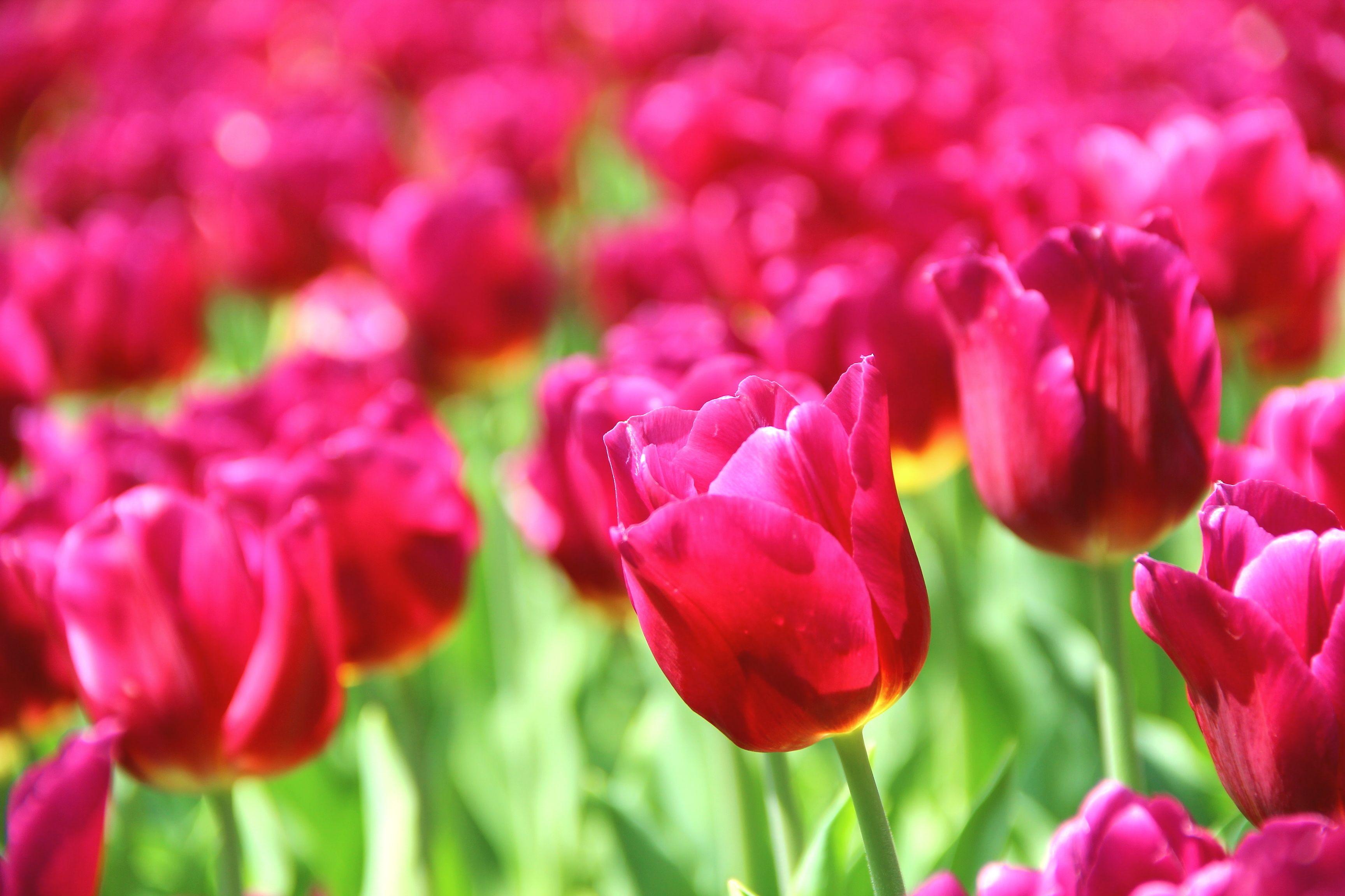Обои цветы, широкоформатные. Природа foto 7