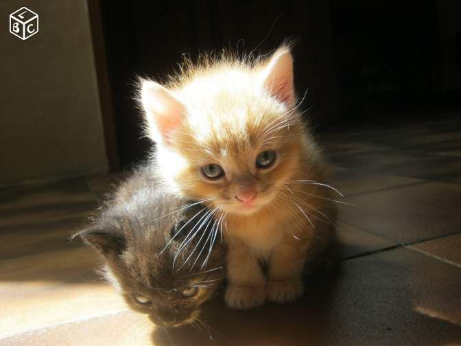 Donne Chatons De 8 Semaines Non Loof Animaux Gers Leboncoin Fr Donne Chaton Animaux Chaton