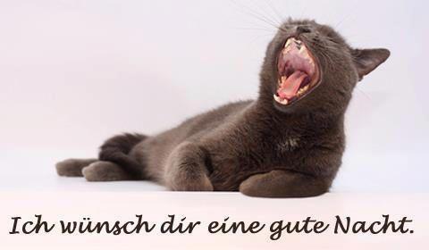 Wünsche all meinen FB Freunden auch eine Gute Nacht und süße Träume - http://guten-abend-bilder.de/wuensche-all-meinen-fb-freunden-auch-eine-gute-nacht-und-suesse-traeume-110/