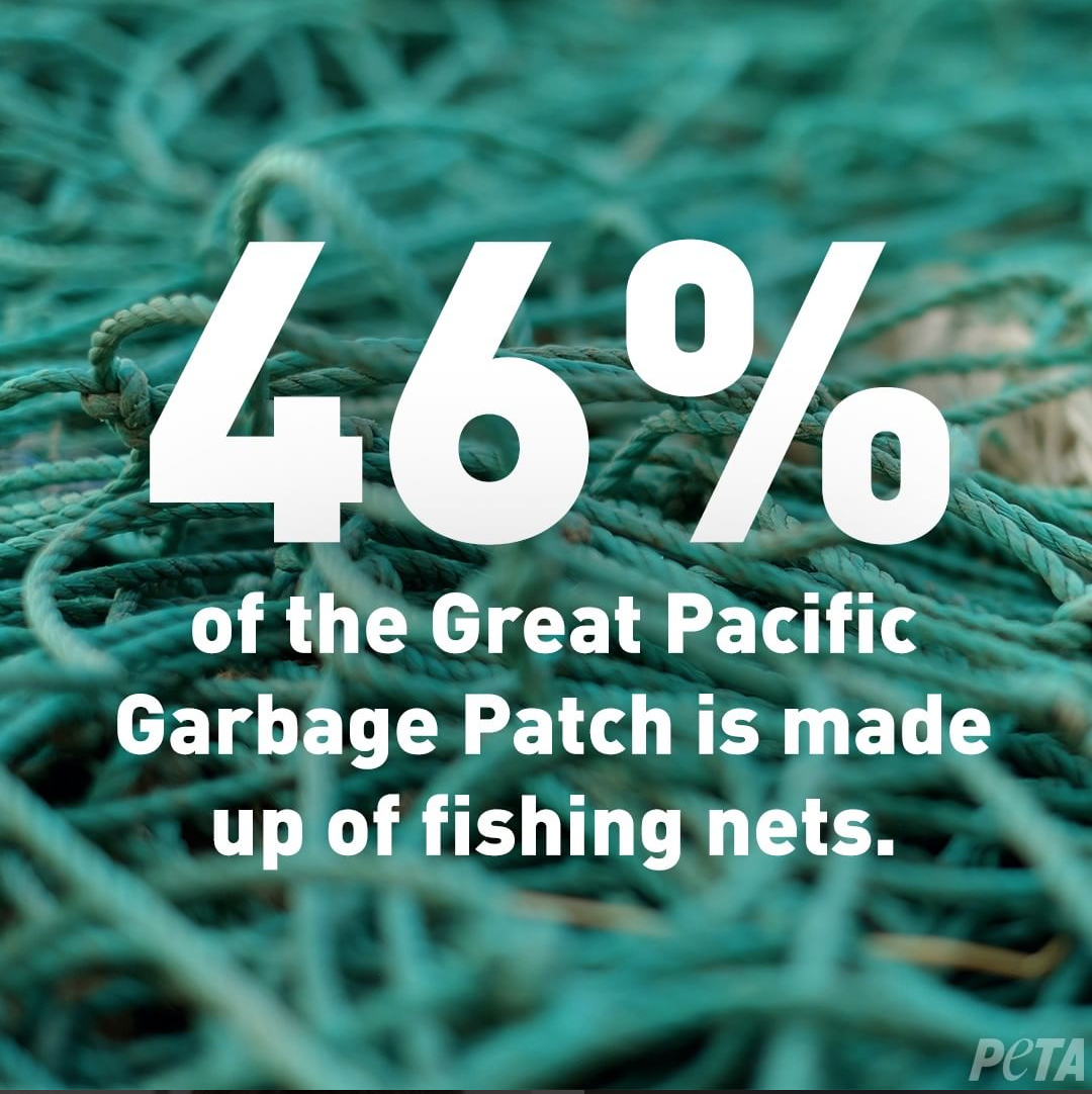 402440d9e0 These days, awareness of plastic waste in our oceans is at an all-time high.  🌊 All over social media, well-intentioned campaigns are taking aim at  things ...