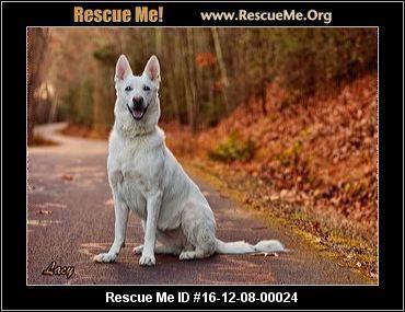 Pennsylvania German Shepherd Rescue Adoptions Rescueme Org