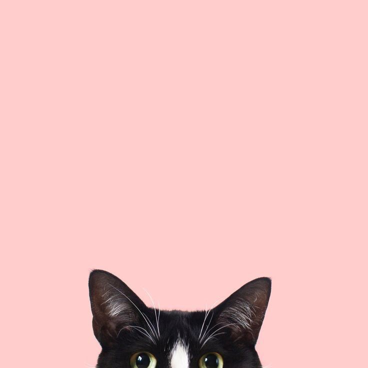 Pin By Deb Richards On Wallpaper Cat Phone Wallpaper Cat Wallpaper Cat Pattern Wallpaper