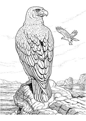 Ausmalbild Adler 2 Bird coloring pages Detailed