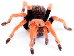 tarantulas literally make me want to vomit YUUUUUUUUUUUUUUUUUUUUUUUUUUUUUUUUUUUUUck!!!!!!!!!!!!!!!!!!!!!!!!!!!!!!!!!!!!!!!!!!!!!!!!!!!!!!!!!!!!!!!!!!!!!!!!!!!!!!!!!!!!!!!!!!!!!!!!!!!!!!!!!!!!!!!!!!