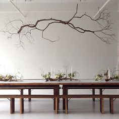 Tree Branch Decor 25 Amazing Diy Branches Chandeliers