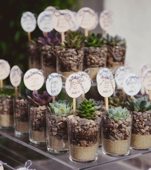Succulent Wedding Favours Plant Ideas