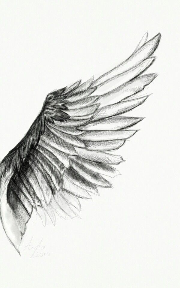 This For My Chest Over My Heart Wings Drawing Wings Tattoo Wing Tattoo