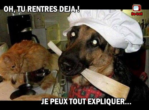 Oh tu rentres d j chien chat animaux rigolos for Janod grande cuisine happy day