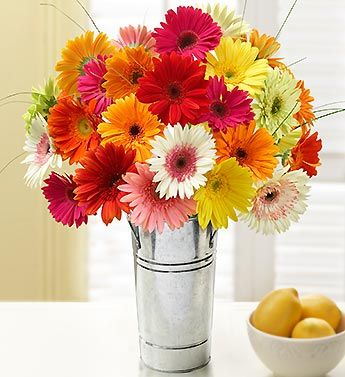 Happy Gerbera Daisies, 24 Stems- two dozen cheery assorted Gerbera daisies, accented with fresh bear grass $54.99- $66.99